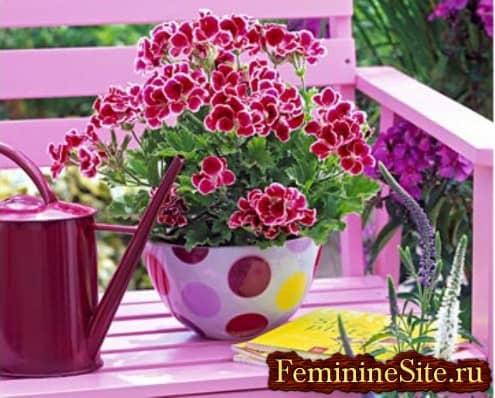 Популярные светолюбивые комнатные растения - герань