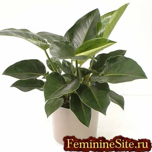 Комнатные лиственные растения - признанные фавориты любого интерьера