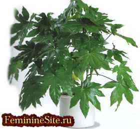 Растения Весов - эмоциональное и физическое здоровье человека