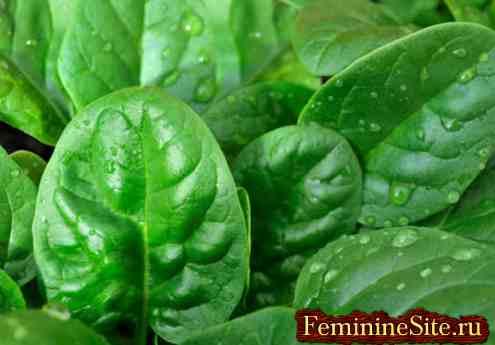 Чем полезен шпинат: выращивание, приготовление и противопоказания.