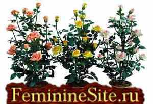 Растения Льва - помощь эмоциональному и физическому здоровью. Фото