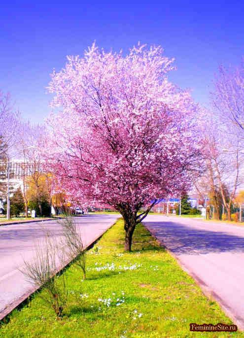 Эфирное масло розового дерева