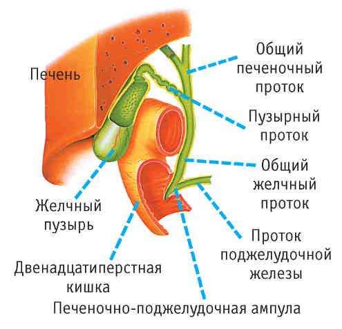 Желчегонные средства растительного происхождения